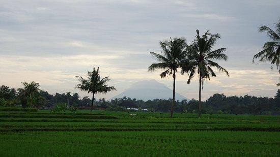 タバナン Picture