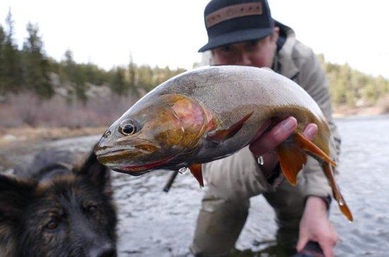 Colorado Rocky Mountain Fly Fishing...