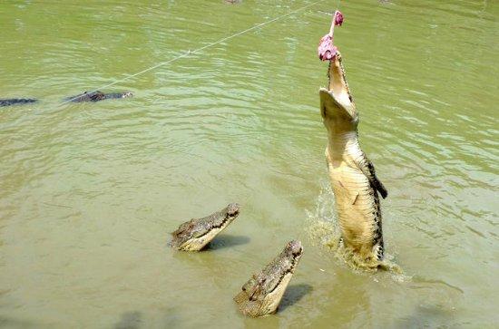 Tour por la granja de cocodrilos de...