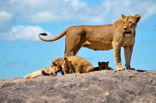 5 jours Tanzanie Big 5 Safaris