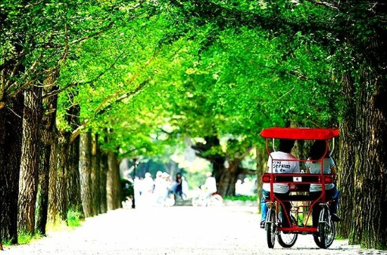 Private Full Day Tour to Nami Island ...