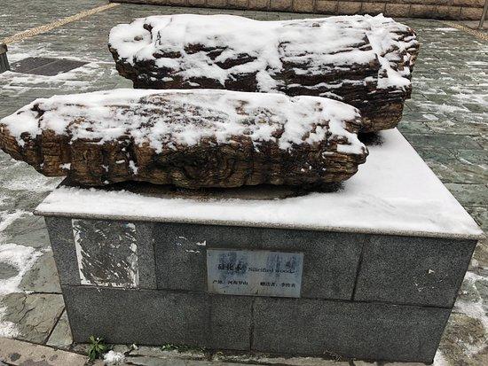 China University of Geosciences Museum: часть внешней экспозиции