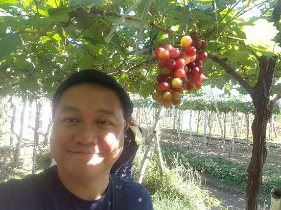 Orpilla-Estigoy Grapes Farm: 20180101_135835_large.jpg