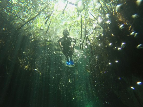 Casa Cenote: GOPR3236_1472402894180_high_large.jpg