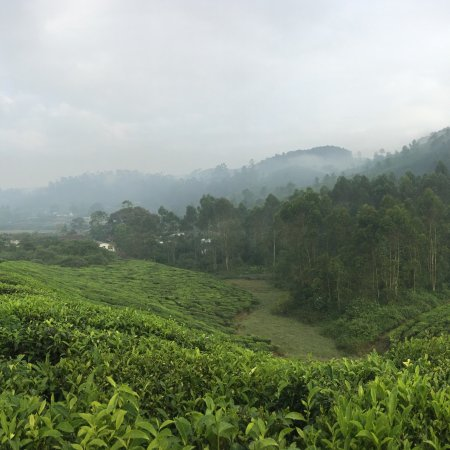 Grand Plaza Munnar: photo0.jpg