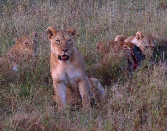 Mighty Safari