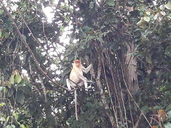 Nature Lodge Kinabatangan: 20180123_173649_large.jpg
