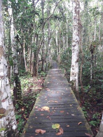 Nature Lodge Kinabatangan: 20180123_134233_large.jpg