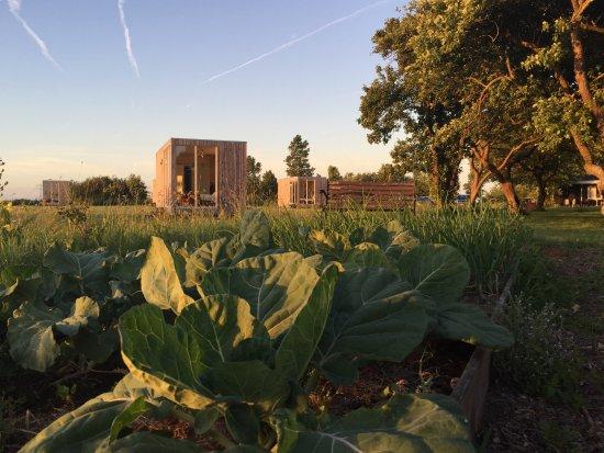 Weidum, Ολλανδία: Moestuin met op de achtergrond Hotelrooms with a View