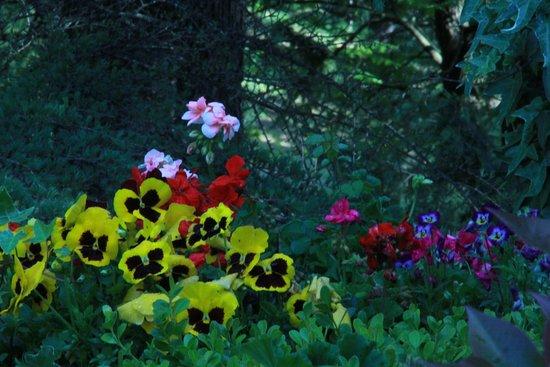 Modigliana, İtalya: giardino