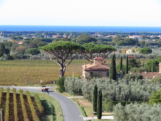 Castagneto Carducci, Italien: The view from the winery