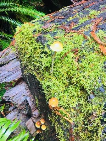 Redwood National Park: Fungus
