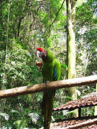 Simon Bolivar Parque Zoologico  y Jardin Botanico Nacional Foto