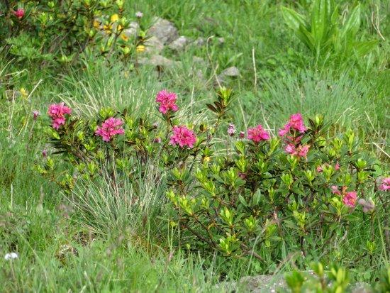 Ciampinoi: bright blooms
