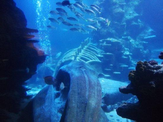 SEA LIFE London Aquarium: IMG_20180126_154842_large.jpg