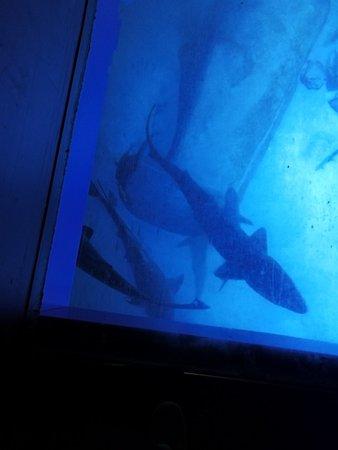 SEA LIFE London Aquarium: IMG_20180126_154021_large.jpg