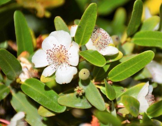Waratah, Australia: Some of the interesting plants