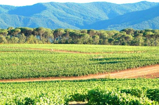 Full-Day Wine Tour around Aix en...