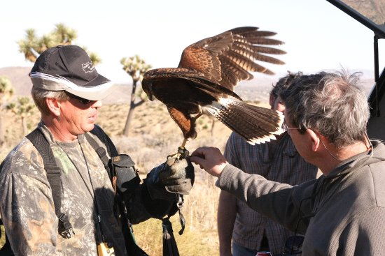 Yucca Valley, Californien: Interaction with Birds of Prey