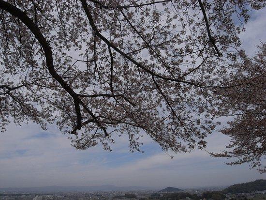 Amakashi no Oka: 桜越しにみる奈良盆地