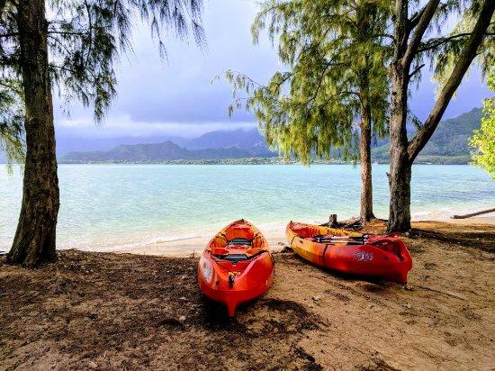 Hawaiian Ocean Adventures: IMG_20180124_090917_large.jpg