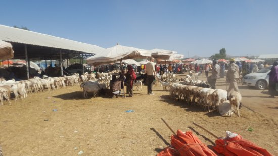 Hargeysa, Somalia: At the camel/livestock market in Hargeisa