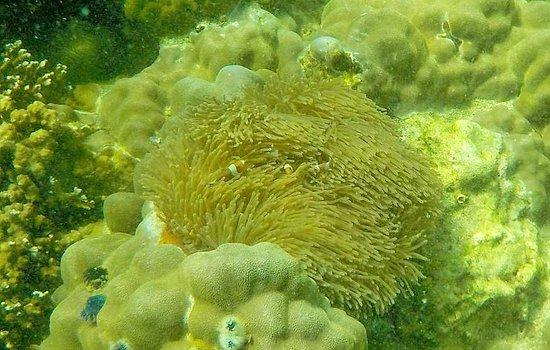 Koh Hin Ngam: pesci pagliaccio