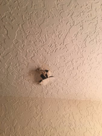 Regal Palms Resort & Spa: Animals digging into ceiling at night!