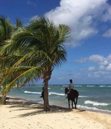 Half Moon : Surf and Turf activity: You actually ride bareback into the ocean and swim with your horse.