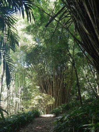San Vito, Costa Rica: Bamboo