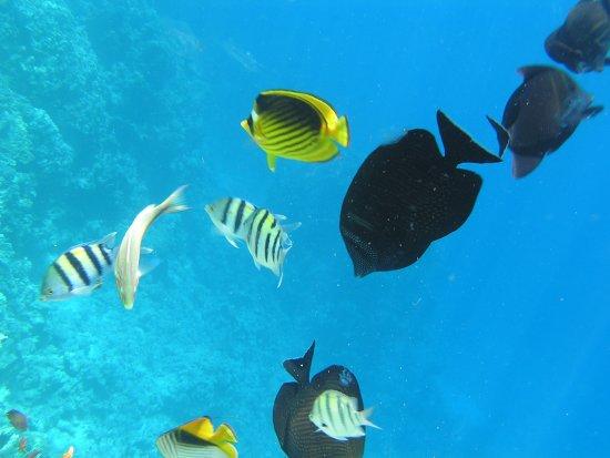 Dsc 3489 billede af the makadi spa hotel for Fish spa near me