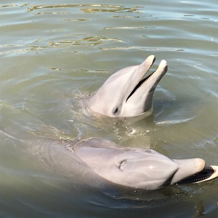 Dolphin Research Center: photo0.jpg