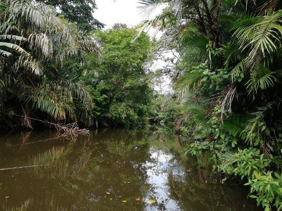 Mancarron, Nicaragua: IMG_20180125_134319_large.jpg