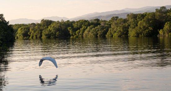 Laguna de Manialtepec : Egret in the mangrove lagoon