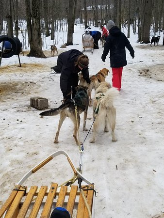 Windrift Kennel Orillia 2019 All You Need To Know Before