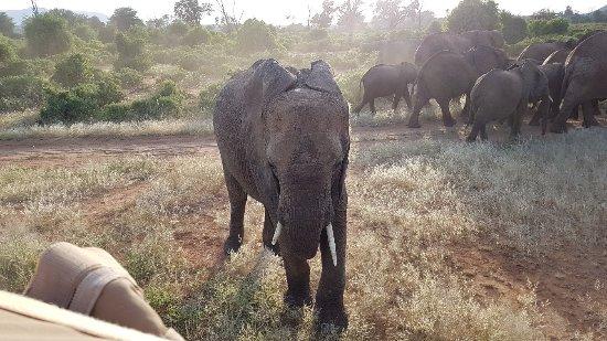 20171215 173805 Picture Of Elephant Bedroom Camp Samburu National Reserve Tripadvisor