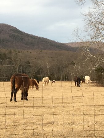Fort Valley, VA: Many happy horses.