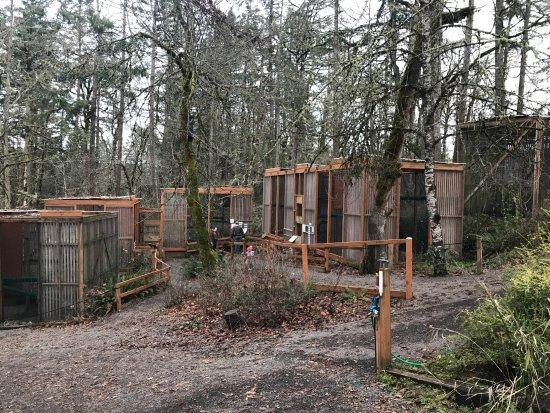 Cascades Raptor Center: Individual houses for each bird