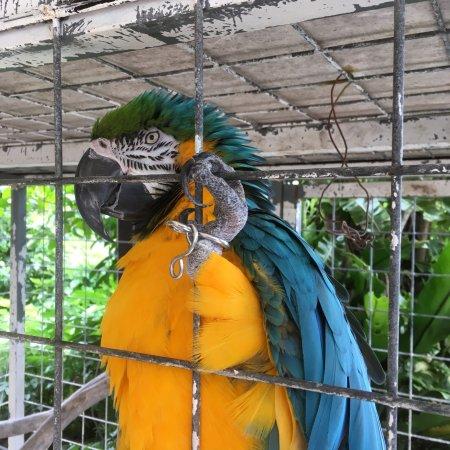Zukeran Poultry Farm Minimini Zoo