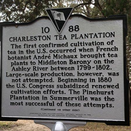 Charleston Tea Plantation: photo0.jpg