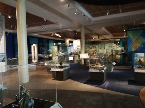 Otago Museum: IMG_20180127_161845_large.jpg