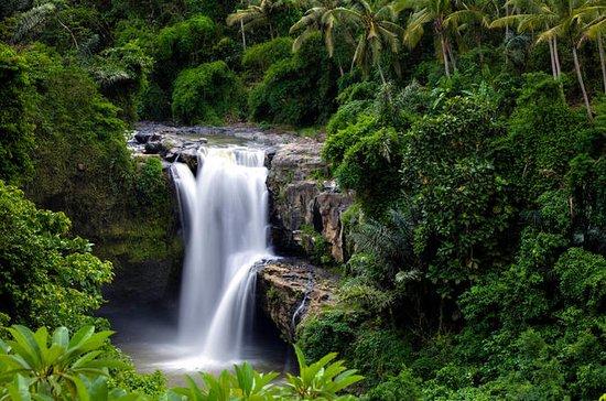 Bali Shore Excursions : Best Nature...