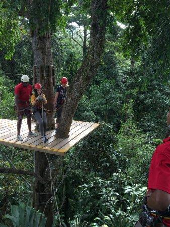 Bastimentos Sky Zipline Canopy Tour : Platform
