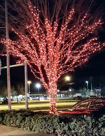 American Music Theatre: Lighted Tree outside the Theatre