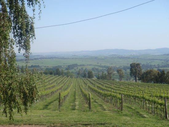 De Salis Wines