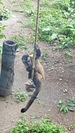 Brooklands Zoo: 20180127_123458_large.jpg