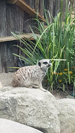 Brooklands Zoo: 20180127_122825_large.jpg