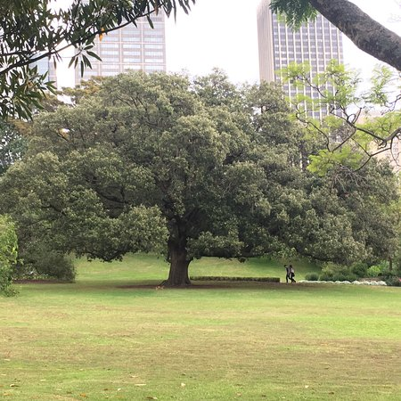 The Royal Botanic Garden: photo0.jpg