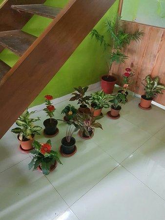 Sandalwood Ayurveda