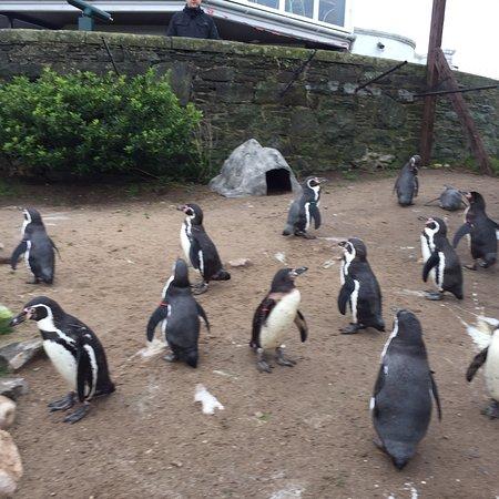 Welsh Mountain Zoo: photo9.jpg